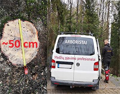 Galimai nelegalus Visorių-Bajorų miško parko kirtimas
